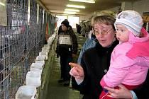 Výstava zaječovských chovatelů
