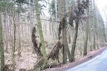 Talihovo údolí lemují suché stromy a větve