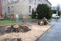 Město Beroun nechalo porazit letitou vrbu u Obchodní akademie a pedagogické školy Beroun. Strom napadla  ve velkém houba. Měl zcela prohnilý vnitřek.