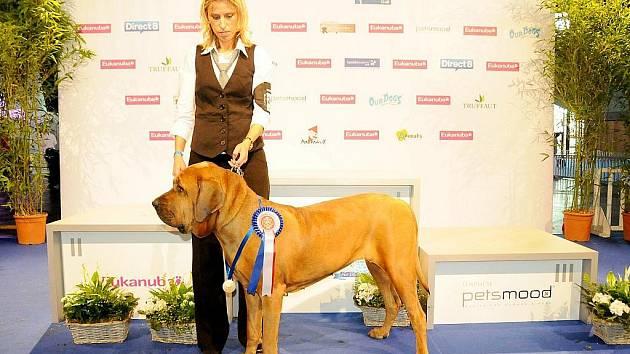 Vítěz světové výstavy psů pochází z Vráže u Berouna