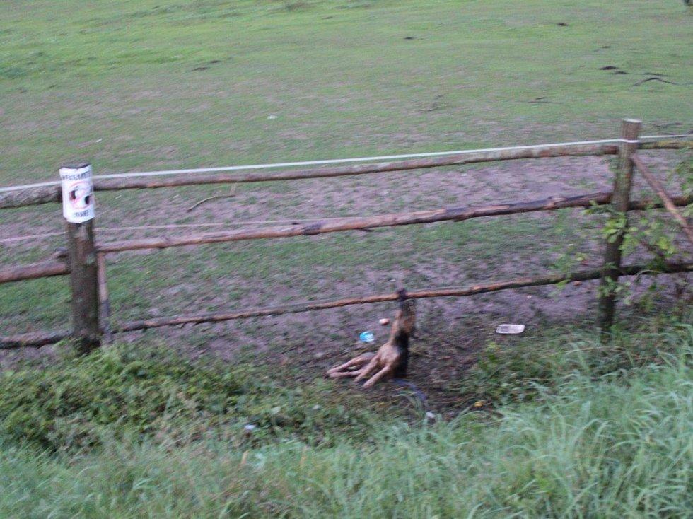 Pes uvázaný k dřevěné ohradě v Loděnicích. Život už mu nikdo nezachránil.