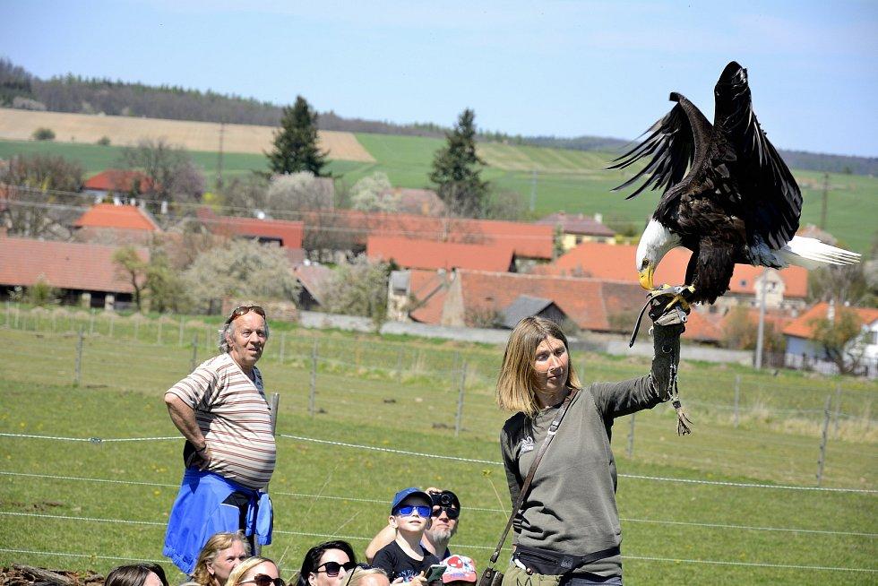 Na Statku u Merlina v obci Chyňava se prolétli dravci.