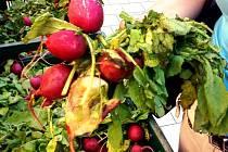 Ředkvičky v berounském Kauflandu prodávali se slevou, ale byly zkažené stejně jako nektarinky.
