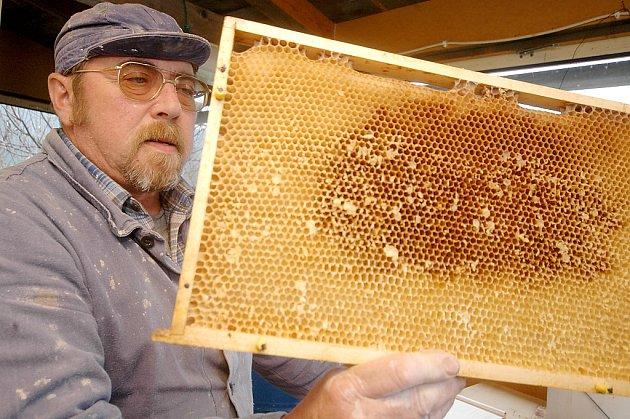 Včelaři jsou proti bodnutí odolnější
