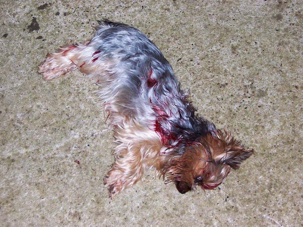 Orel, který zabil psa a zranil jeho majiteku, ulétl chovateli