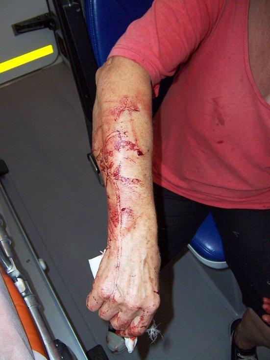 Orel, který zabil psa a zranil jeho majitelku, ulétl chovateli