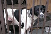 Deset psů, jejichž majitelé tragicky zemřeli, přežilo. Postarala se o ně Policie ČR, která všech deset zvířat převezla do policejních kotců a nakrmila je.