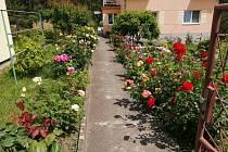 Spolek Horovize kromě jiného také vyhlásil soutěž o nejhezčí květinový truhlík, rozkvetlé okno, rozkvetlý záhon či zahrádku.