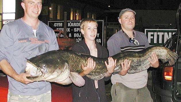 Sumec, kterého rybáři ulovili v Berounce, měřil 188 centimetrů.