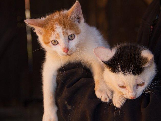 Zachráněná koťátka