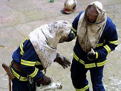 Hnízda nebezpečného hmyzu likvidují profesionální hasiči speciálním postřikem. - Ilustrační foto.