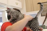 Na výstavě koček v Berouně bylo opravdu živo.