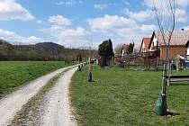 Vysázené ovocné stromy i lípy v Karlštejně.