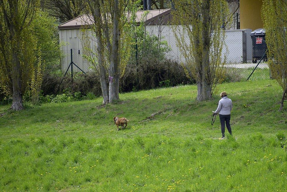 Město Beroun v minulém roce nainstalovalo zhruba tři desítky speciálních zásobníků na sáčky určené pro psí exkrementy.