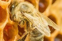 Přednáška na téma včelaření.