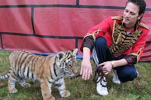 Na snímku je s tříměsíční samičkou tygra Patrik Joo.