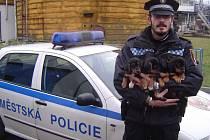 Blatenský strážník drží čtyři nalezená štěňata.