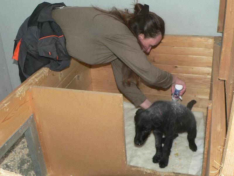 Útulek pro psy byl uveden do provozu v prosinci 2007. Je určen pouze pro opuštěné a nalezené psy, a to ze Strakonic a Písku.