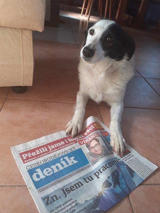 Fenka Máša si svůj Deník brání.