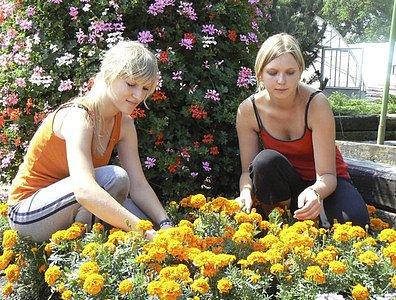 Před zahájením výstavy květin v Čimelicích, která dnes otevře své brány, brigádníce ještě kultivovaly záhony