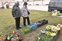 Od soboty 13. května začínají v Bavorově  sazenicové farmářské trhy v hospodářské budově Panského domu.