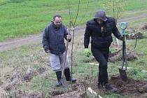 Úředníci radnice vysazovali stromy.