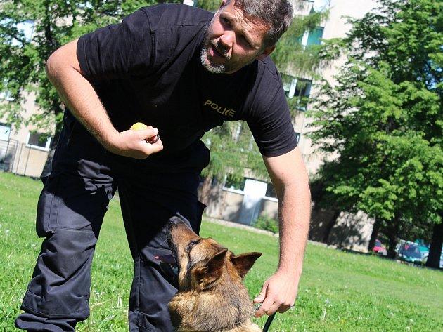 Prvňáčci ze ZŠ Dukelská viděli ve čtvrtek dopoledne výcvik služebních policejních psů. Na snímku psovod Jiří Pixa a Michal Hrachovec předvádějí, co umí cvičený policejní pes - německý ovčák Xell.