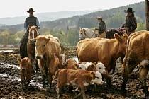 Vyhánění dobytka v Hoslovicích