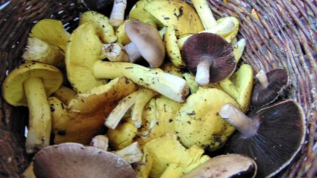 Podzimní houbaření.