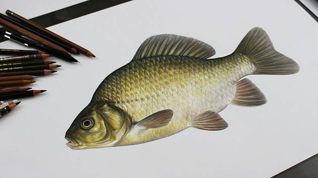 Radka Bošková kreslí tak, že ryby vypadají jako na fotce.