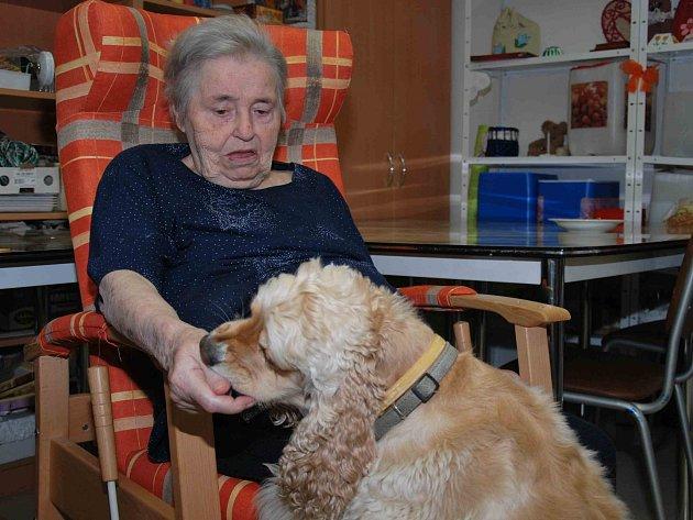 Fenka amerického kokršpaněla Jessie pomáhala v Domově pro seniory ve Strakonicích.