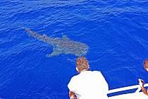 Vodňany - Střední rybářská škola pořádá den otevřených dveří.