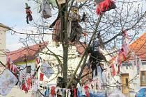 Čarodějnický strom v Radomyšli.