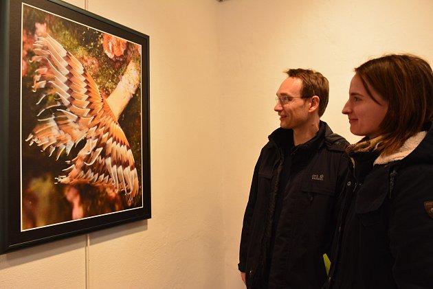 Fotografie Luboše Benáka z podmořského světa trochu matou příchozí návštěvníky výstavy.