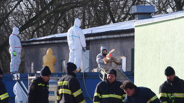 Uzavřený chov kachen společnosti Blatenská ryba museli 26. ledna 2017 zlikvidovat hasiči a veterináři. Na vině byl virus ptačí chřipky, celkem šlo o 6500 kusů kachen. Ty představují cca 20 tun živého masa.