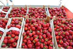 Do Bavorova míří každoročně v červnu zájemci o čerstvé české jahody.