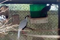 V Jemnicích žijí manželé Šindelářovi, kteří na svém pozemku mají malou zoo po jihočesku.