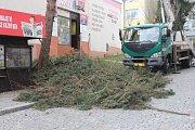 Jedle v ulici Hrnčířská musela k zemi.