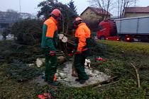 Likvidace stromu u viaduktu.