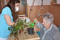 V rámci zahradní terapie má Domov pro seniory v Centru sociální pomoci Vodňany rozsáhlé možnosti, jak uspokojit touhu po zahradničení.