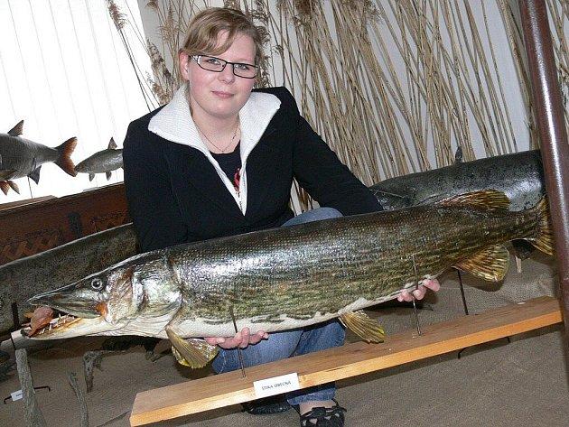 Výstava preparátů ryb ve Vodňanech.