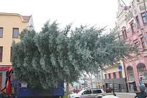 Na Velké náměstí doputoval vánoční strom.
