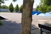 Zničený strom.