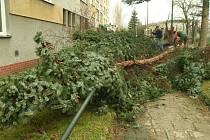 Úklid stromů v ulici Hradeckého.