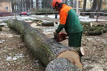 Koncem týdne šel k zemi strom v Rennerových sadech.