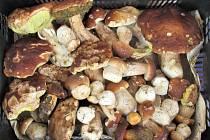 Srdce každého houbaře zaplesá.