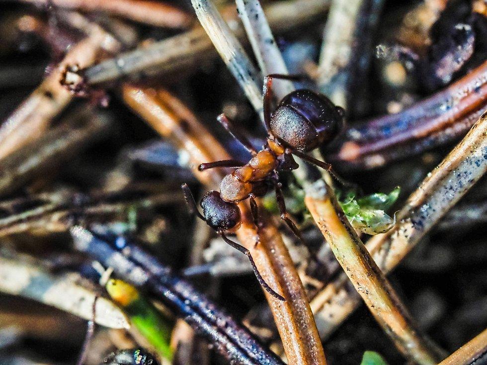 Mravenci. Ilustrační foto.