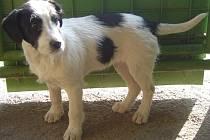 Nalezený pes