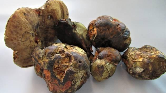 Jan Malířský se vyšel do lesů podívat, jak je to s houbami.