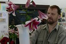 Nedílnou součástí volyňské pouti bývá i výstava pěstitelů lilií.